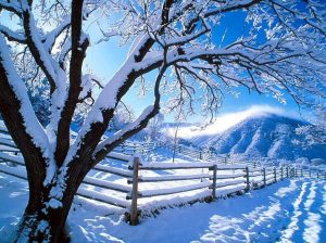 Winter-21culff